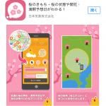 お花見を企画する参考にはなるかもしれないアプリ〜桜のきもち〜