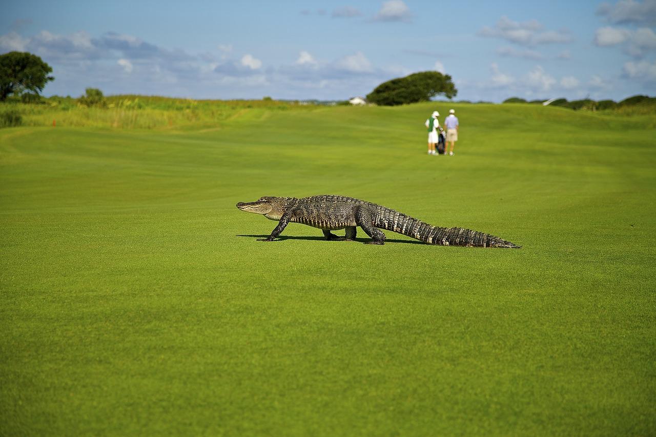 ゴルフに行くならゴルファー保険への加入は必須。「たまにしか行かない」ならなおさら!夢を見るならホールインワン保険も付けて!?